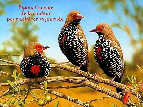 oiseau.jpg
