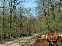 oui ! chemin forestier