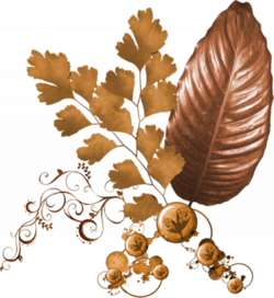 Nature, feuilles, fleurs