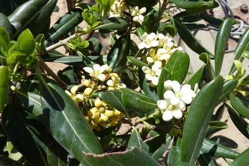 Quelques fleurs de Tunisie
