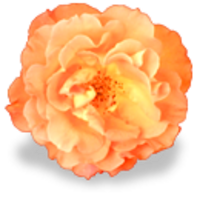 fleurs-22