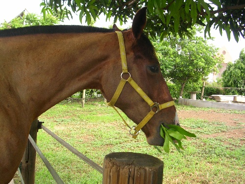 j'aime les feuilles de mangier!