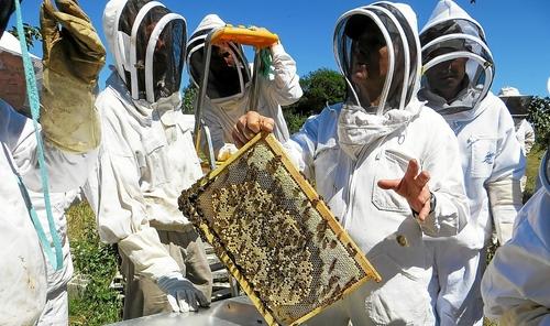 Cap-Sizun. Ils protègent l'abeille noire (LT-28/02/2018)
