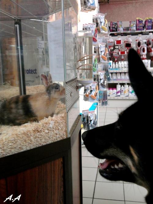 Au magasin avec Fi'ona