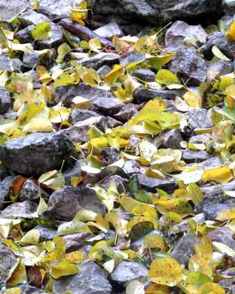 feuilles sur le sentier