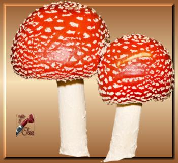 AUT0009 - Tube champignons