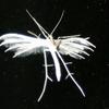 Dr?d'insecte...