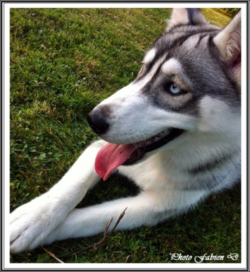Haska (8 mois)