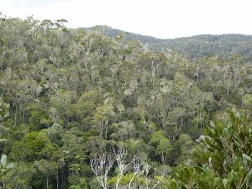 Patrimoine mondial de l'Unesco : La réserve naturelle intégrale des Tsingy de Bemaraha - Madagascar -