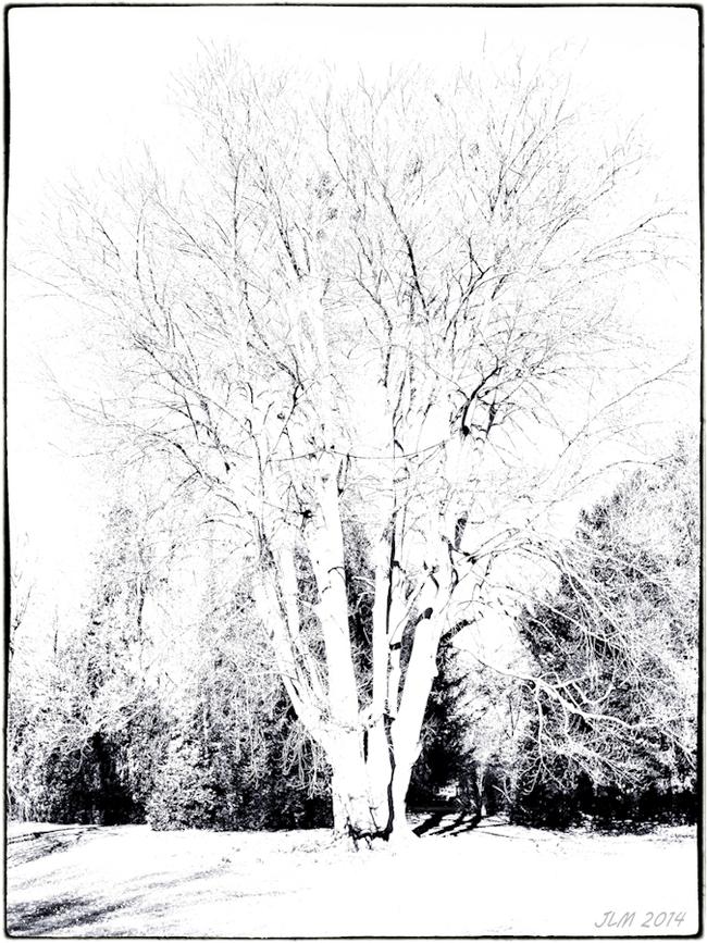 Comme un arbre (dans la ville)