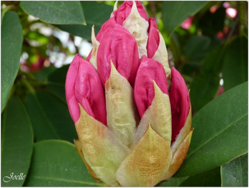 Fleur Qui S Ouvre Idee D Image De Fleur