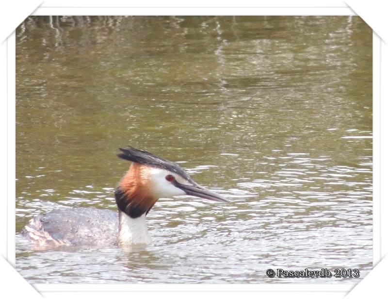 Symphonie printanière à la réserve ornithologique du Teich - 15/20