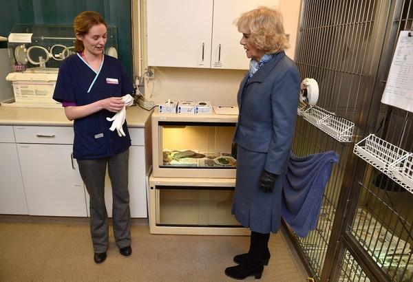 A la clinique vétérinaire