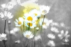 ☮C'est le printemps! ☮
