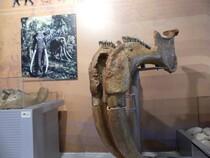 Sigri forêt pétrifiée musée