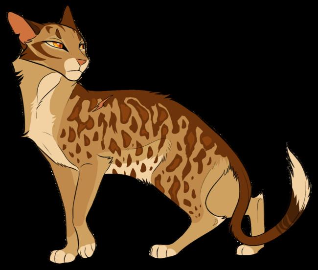 Étoile du Léopard - Leopardstar