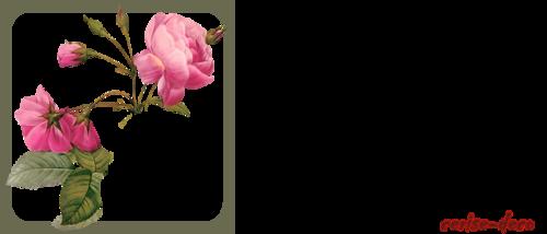 bannière rose ancienne