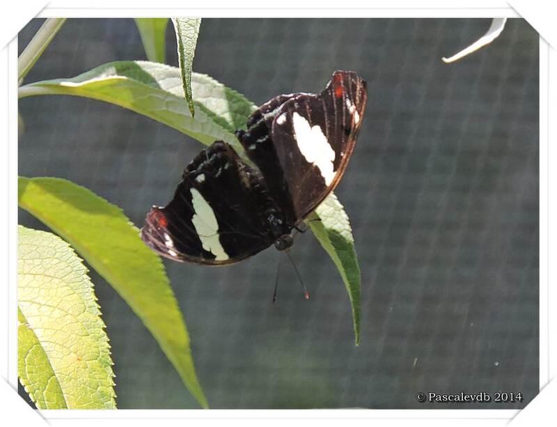 Au Paradis du Papillon à Sanguinet - 6/10