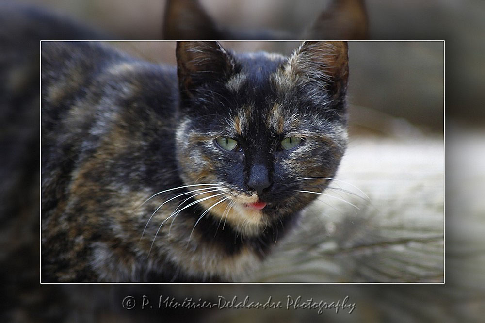 Portraits de chat