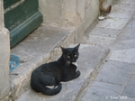 Narbonne - chats