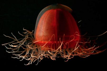 Les animaux de l'océan ou de la méditerranée