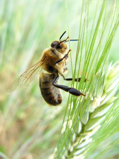 Interdisez les insecticides néonicotinoïdes pour sauver les Abeilles !