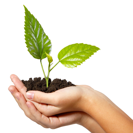 "Plants - Opération ""Biodiversit'haies"""