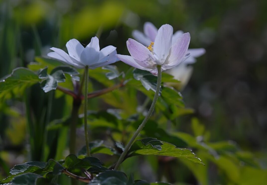 Fleurs-12-0379.jpg