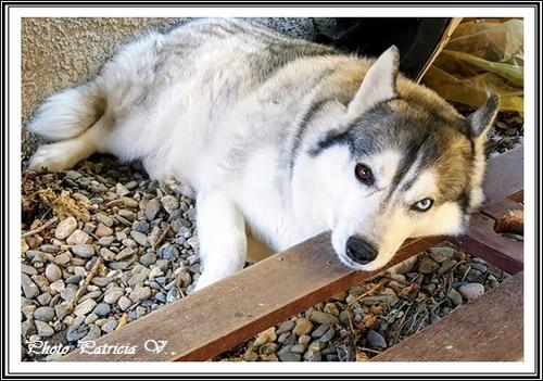 Inouk (5 ans)