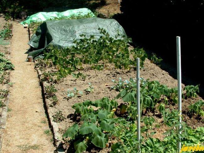 Potager, les légumes au camping