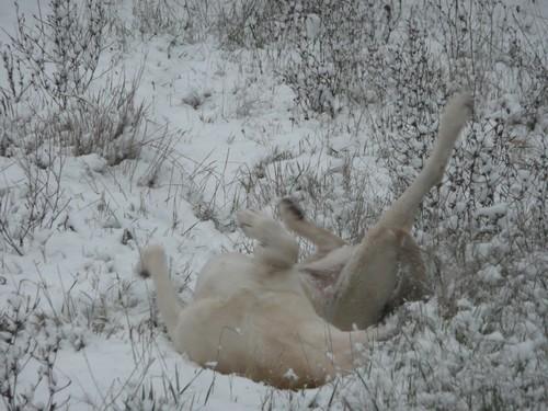 utah roule neige