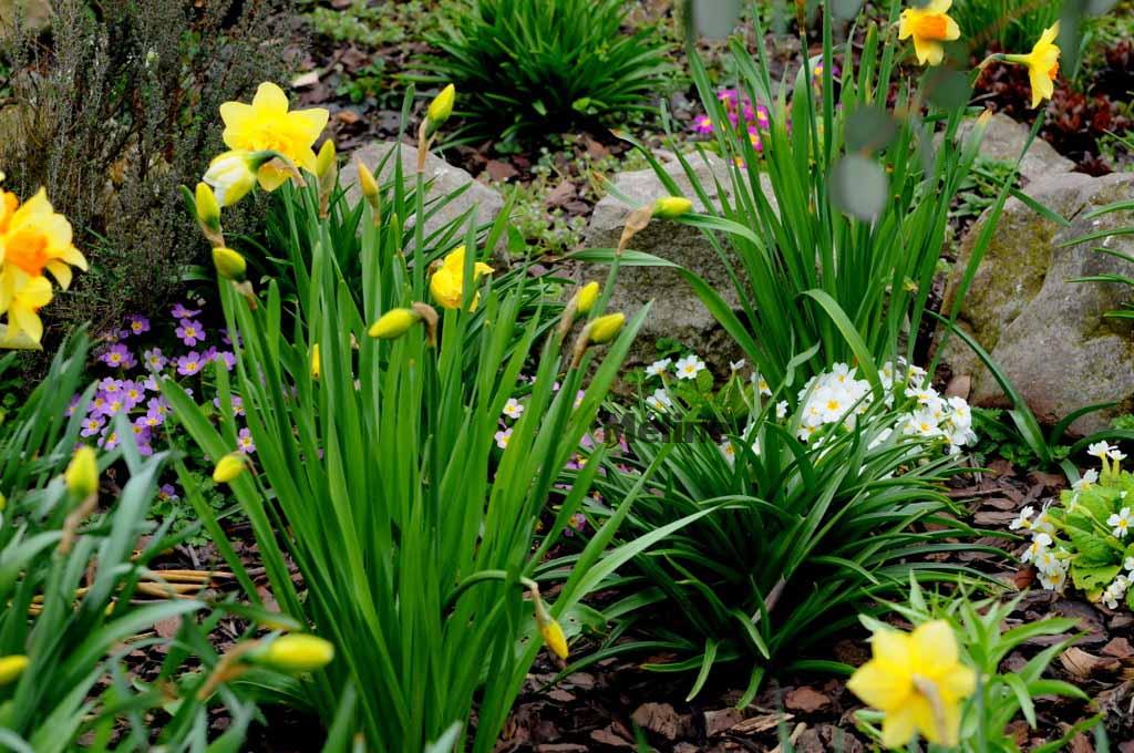 Mon jardin commence à revivre (3) Quel bonheur !