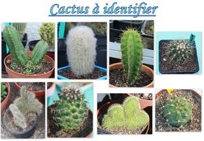 Photos nature-Cactus et Succulentes-Faune et Flore
