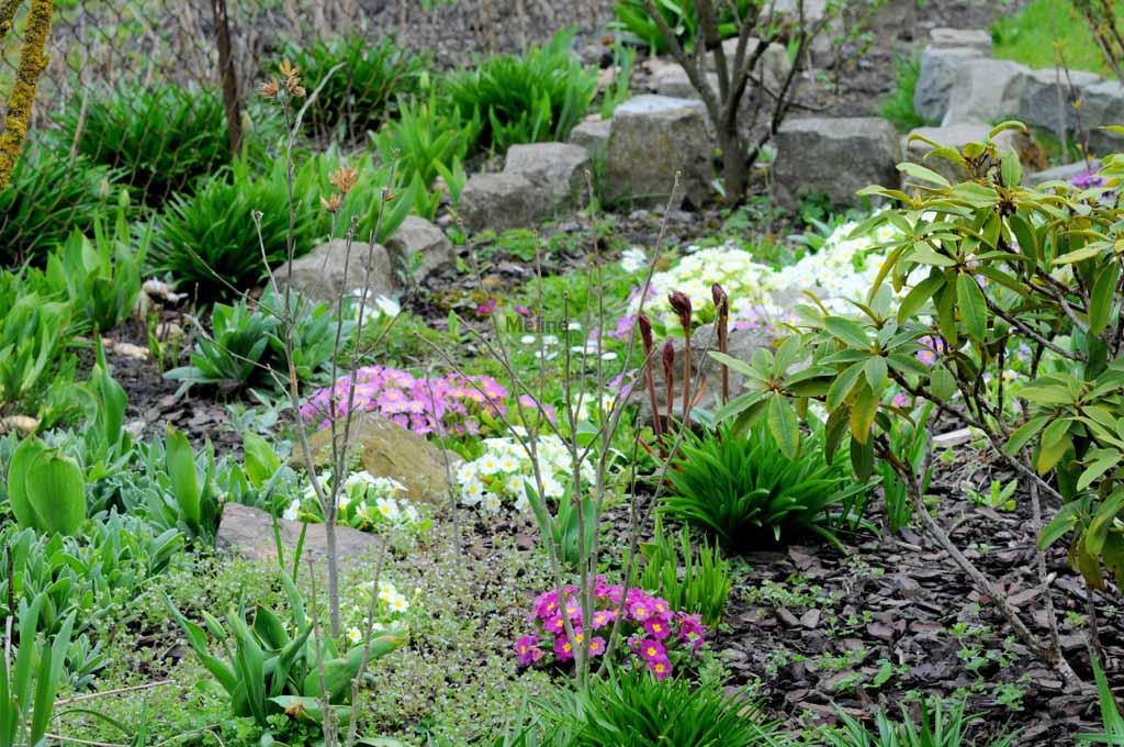 Mon jardin commence à revivre !