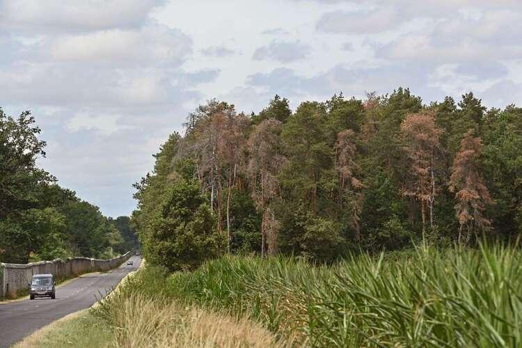 En forêt de Vierzon, «les arbres meurent de soif»