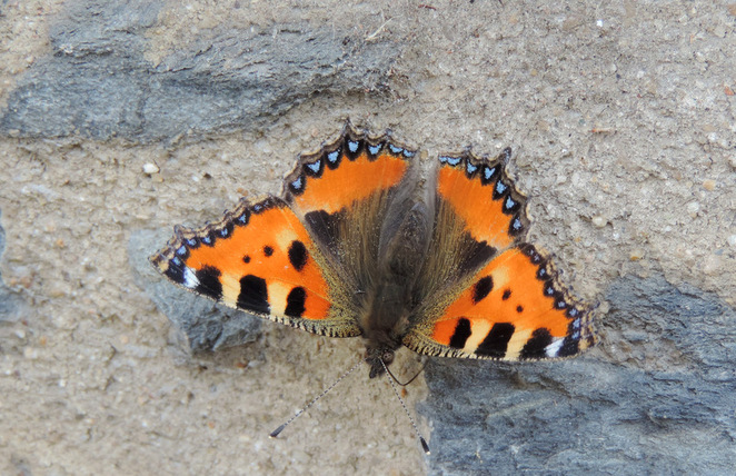 Portraits de Papillons...