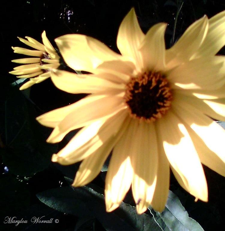 Ingersheim : Un nouvel après-midi au jardin