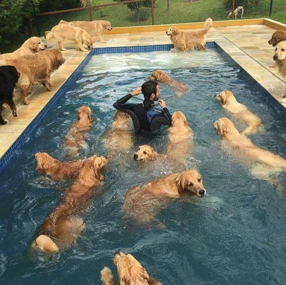 Nos Goldens adorent l'eau page 2