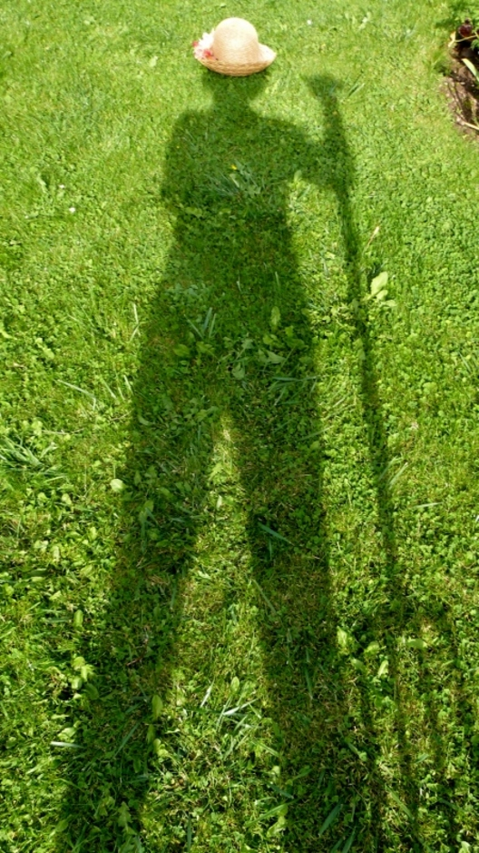 Jeux d'ombre sur gazon...