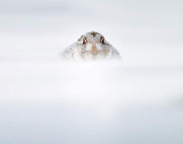 xx-animaux-dont-la-beaute-est-sublimee-par-les-couleurs-hivernales19