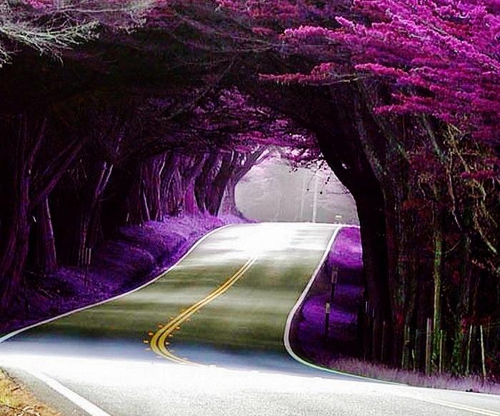 Absolument magnifique !!!