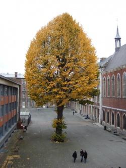 tilleul Lycée