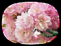 """Sujet """"Fleur"""" défi journalier du 07/11"""