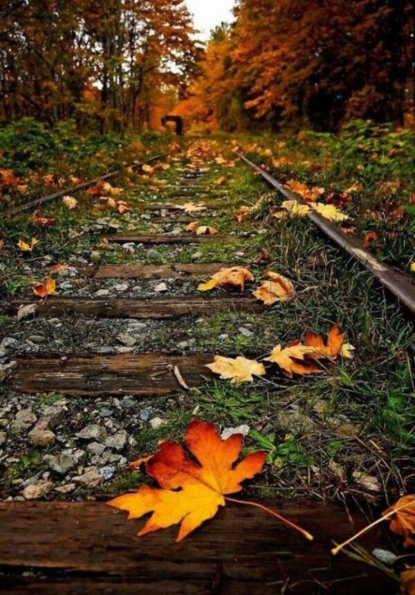 10 Images ou gifs d'automne