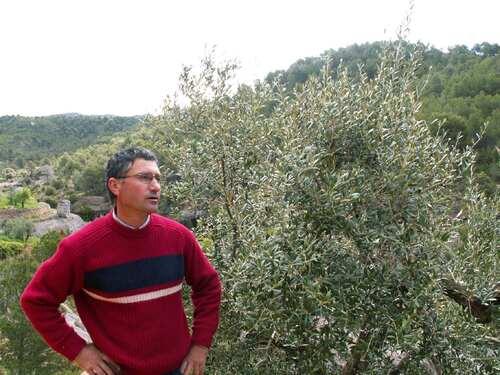 """Commande commune d'huile d'olive """"bio"""" de Baronia de Cabacès"""