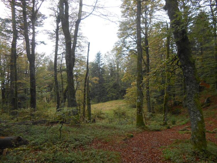 Vosges-le massif du Ventron #2