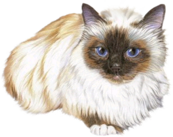 Tubes animaux chats en png