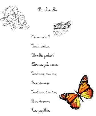 """Résultat de recherche d'images pour """"cycle chenille papillon montessori"""""""