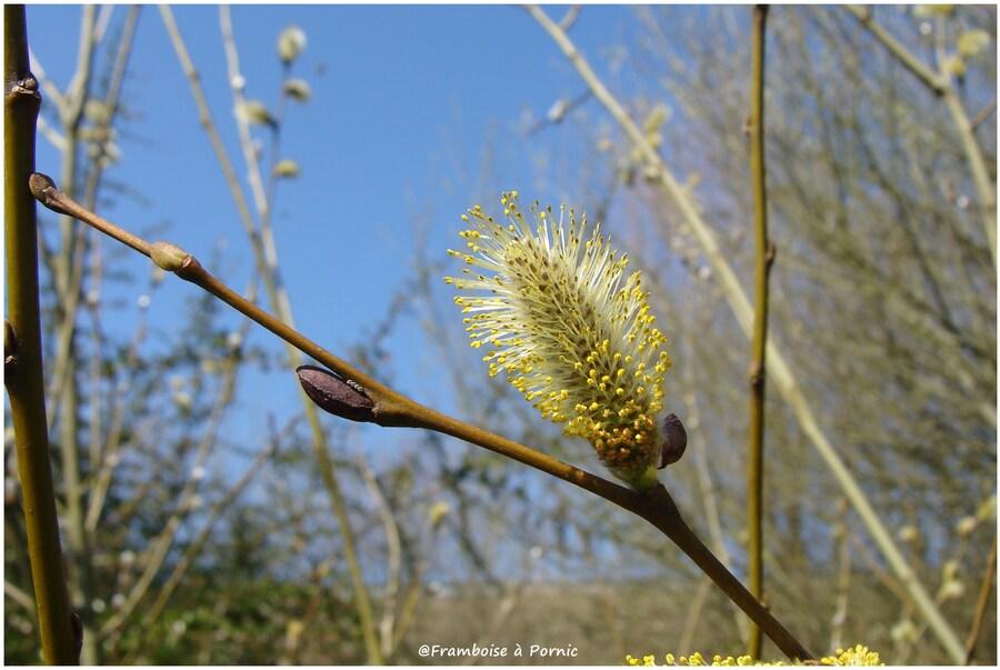 Printemps - Spring - Primavera - Printe