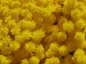 Sentiments de fleurs